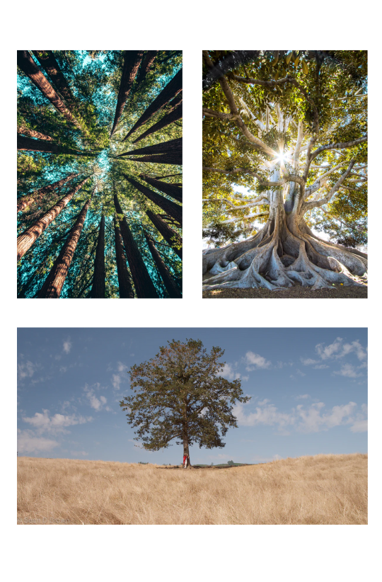 """Sample Images for """"A Tree or Leaf"""" - Photography Challenge"""