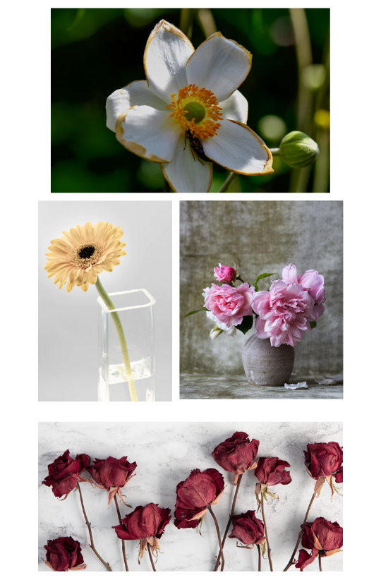 "Sample Images for ""Flowers"" - Photography Challenge"