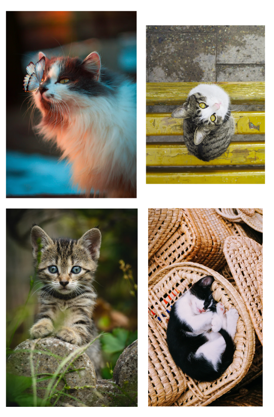 "Sample Images for ""A cat or kitten"" - Photography Challenge"