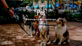 "featured image thumbnail for post ""Pet"" - Photography Challenge"