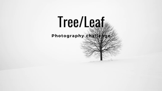 "featured image thumbnail for post ""A Tree or Leaf"" - Photography Challenge"