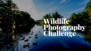 featured image thumbnail for post Wildlife Photography Challenge