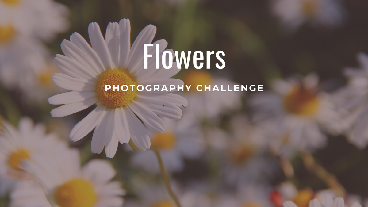 "featured image thumbnail for post ""Flowers"" - Photography Challenge"