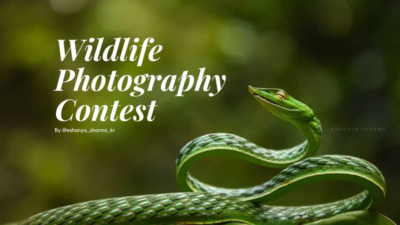featured image thumbnail for post Wildlife Photography Contest