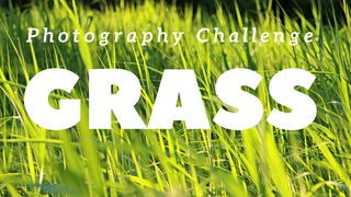 featured image thumbnail for post Grass - Photography Challenge
