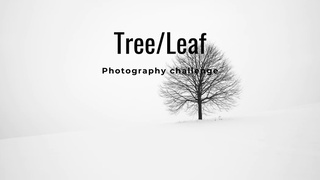 """featured image thumbnail for post """"A Tree or Leaf"""" - Photography Challenge"""