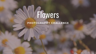 """featured image thumbnail for post """"Flowers"""" - Photography Challenge"""