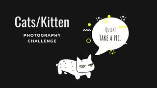 """featured image thumbnail for post """"A cat or kitten"""" - Photography Challenge"""