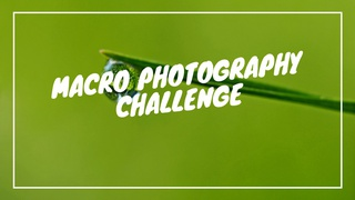 featured image thumbnail for post Macro Photography Challenge