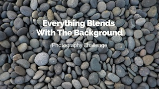 """featured image thumbnail for post """"Everything blends with the background"""" - Photography Challenge"""