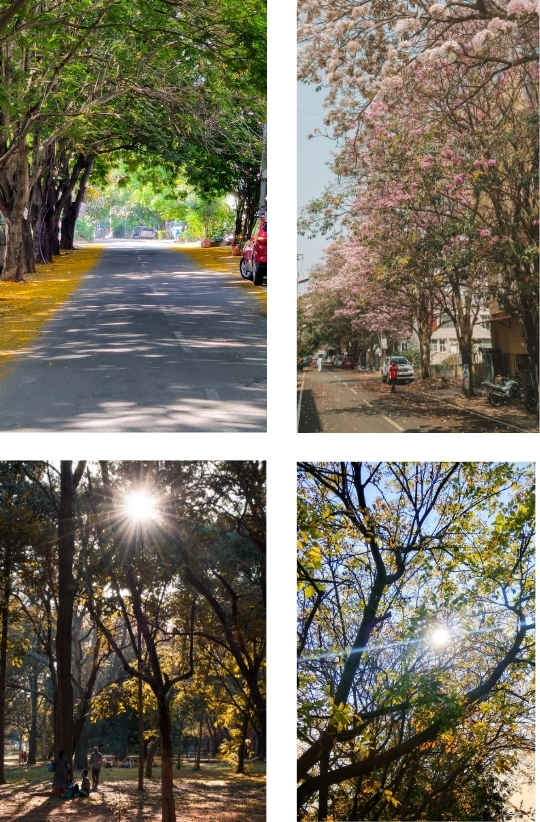 Sample Images for Garden City Bengaluru - Photography Challenge