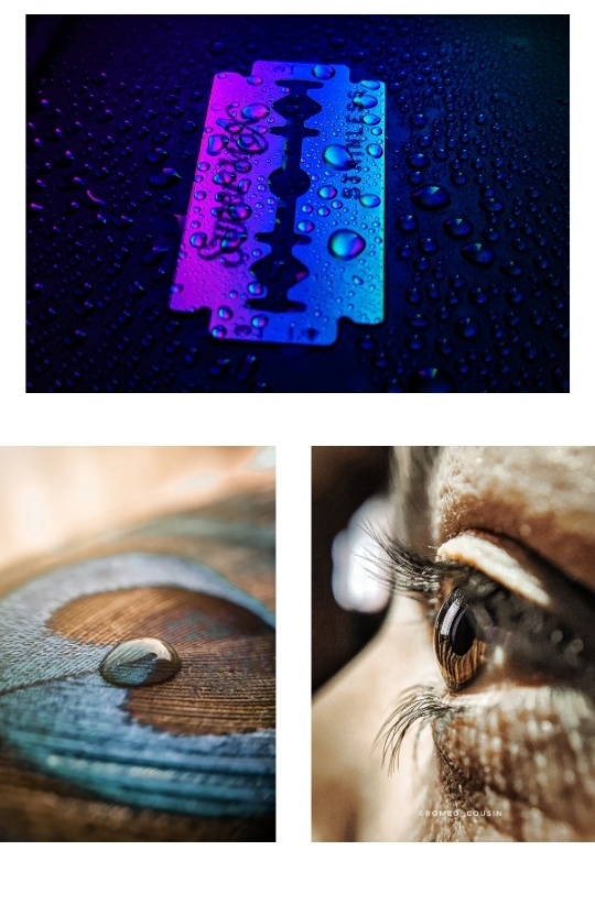 Sample Images for Macrography - Photography Challenge