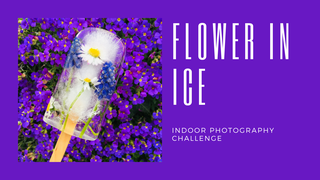 featured image thumbnail for post Flower in Ice (Frozen Flower) - Photography Challenge