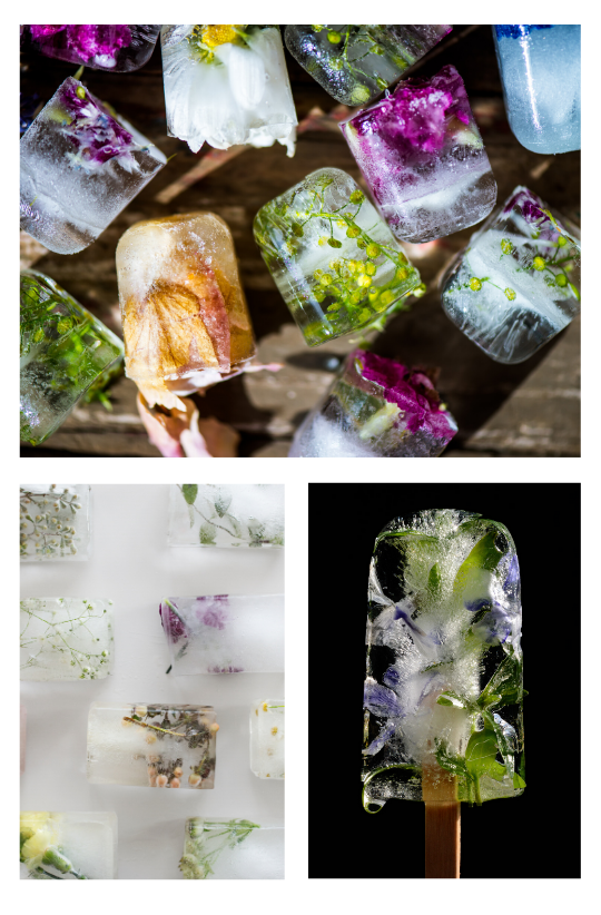 Sample Images for Flower in Ice (Frozen Flower) - Photography Challenge