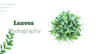 featured image thumbnail for post Leaves Photography Challenge