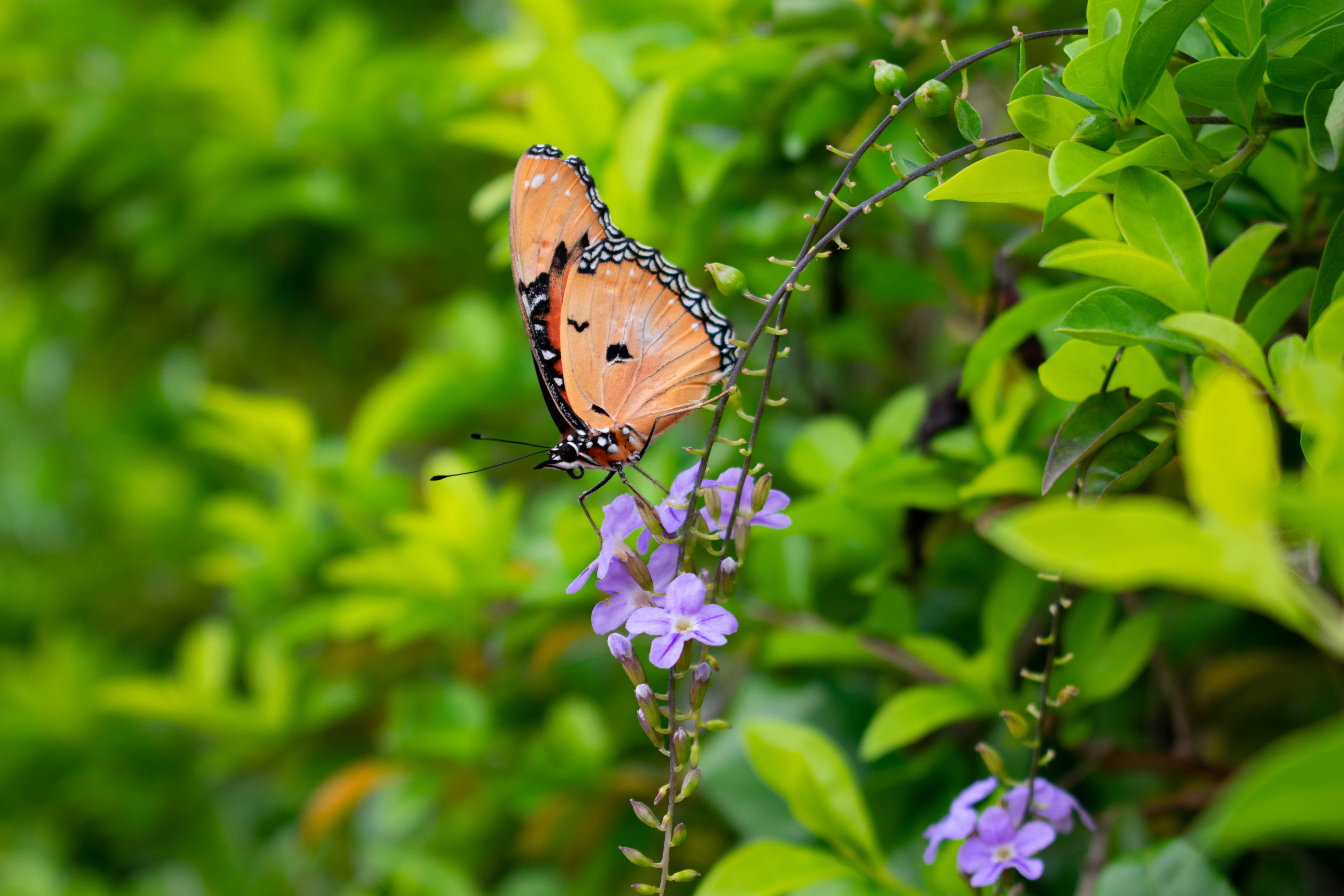 Sample Images for Summertime and Butterflies - Photography Challenge