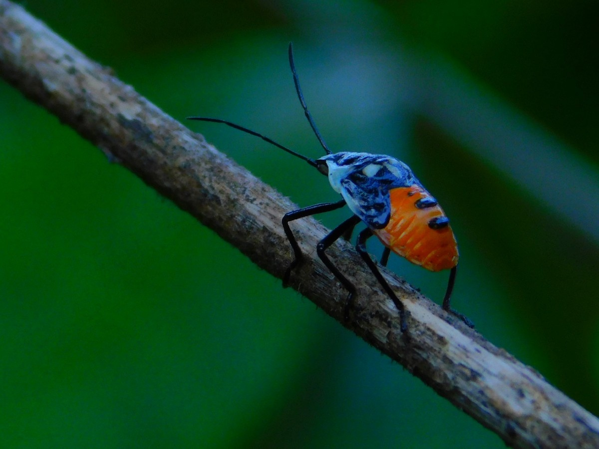 Sample Images for Insect Photography